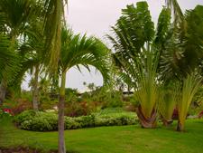Melia Caribe Tropical Punta Cana