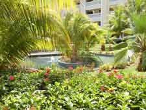 Garden and grounds view of Iberostar Rose Hall Beach Resort in Jamaica
