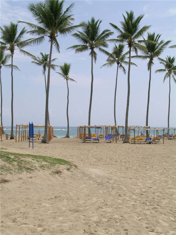 Relax under swaying palms at the Ocean Blue Resort