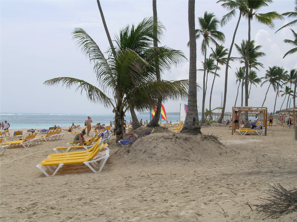 Palm dotted beach at Ocean Blue Resort in Punta Cana