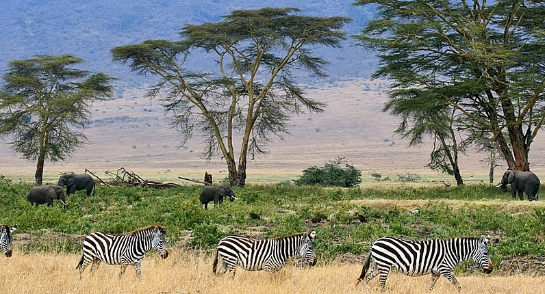Educational Vacations for Families Safari