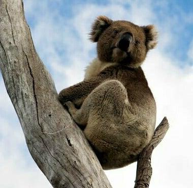 top family destinations for 2019 Australia