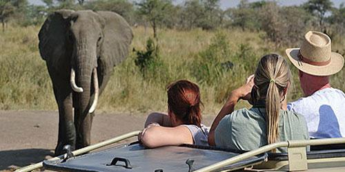 safari-kid.jpg